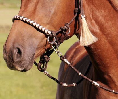 beautiful reins
