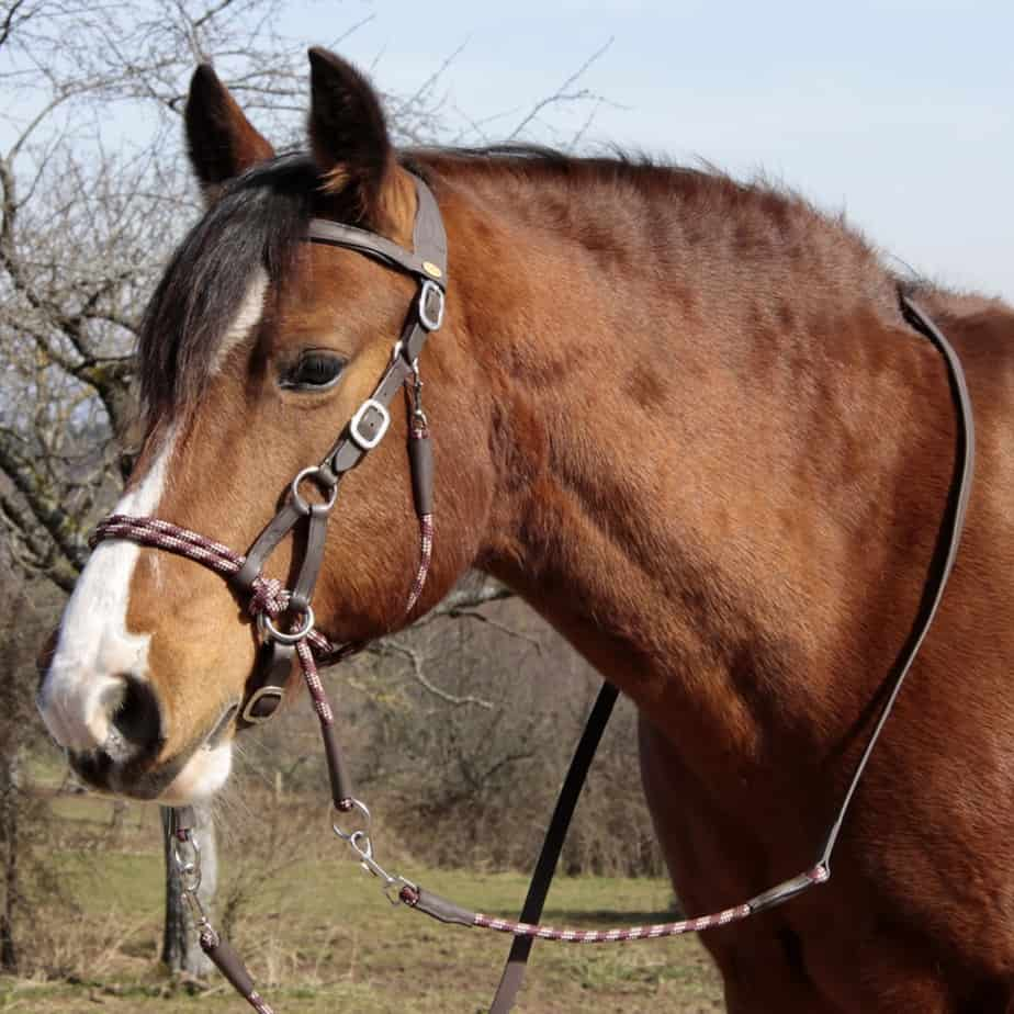 ENGLISH OR WESTERN HORSE BLACK LEATHER BITLESS BRIDLE SIDEPULL /& MATCHING REINS