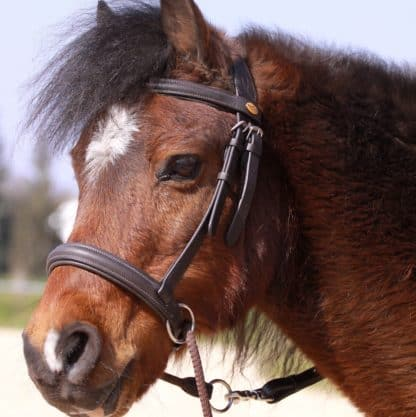 bitless bridle for kids