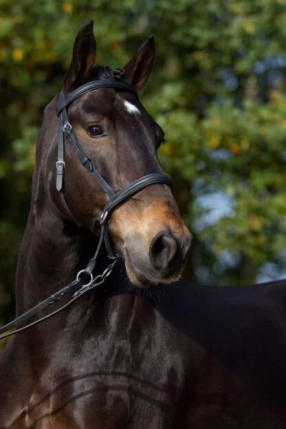 leather bitless bridle