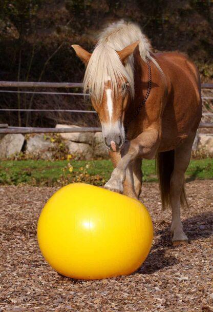 kamuolys žirgų treniravimui