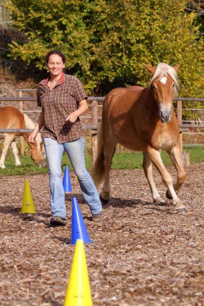 обучения лошади