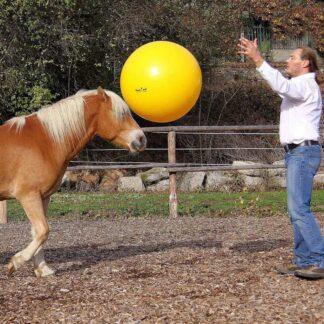 Hobuse treenimine