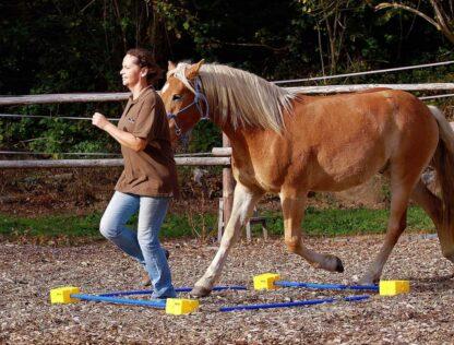 blokas žirgų treniravimui