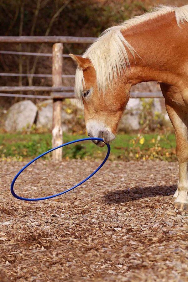 rõngas hobuse treenimiseks