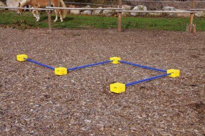тренировки лошадей